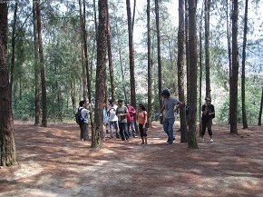 In the Pine Grove