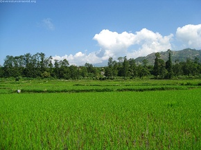 alluring beauty-Green field and the blue sky...