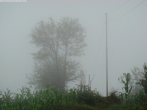 fog wrapped nature
