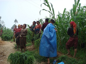 women planting millet with the start of mansoon