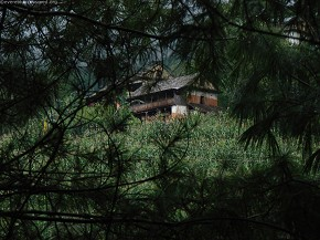 A House through the Pines