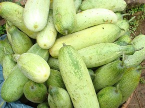 Mouth watering cucumber