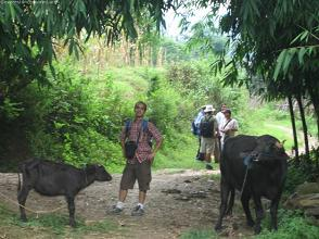 Water buffalo, his son and a human being.