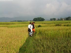 Pondering in the paddy field