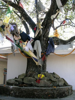 Cloth bearing tree!