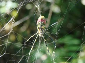 Arachnid_smartly webs traps for prey