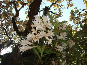 Dendrobium - Surpsingly welcomed us
