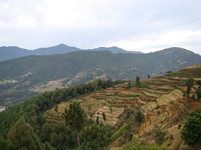 Flower Cultivation in slopes