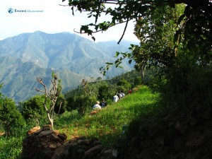 105. Hiking between green cultivation is healthy