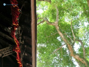 96. Tree radiating green alongside manakamana temple roof