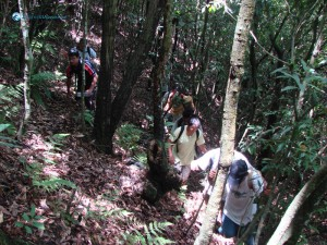 14. Climbing through the jungle trees is difficult