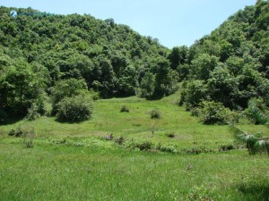 2. Beautiful green forest alluring all