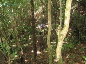 49. Lost way in deep jungle There is no path