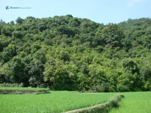58. OMG what a stunning green beautiful forest