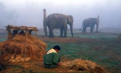 Preparing food for Elephants