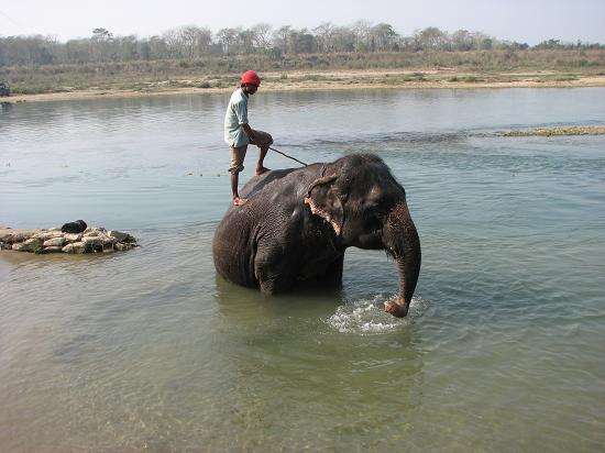 67 elephant bathing