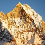 Machhapuchhre in yellow robes at sunset