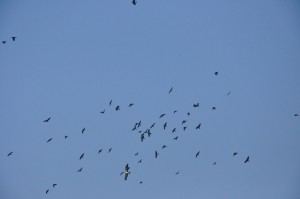 6-birds-viewing-the-match-from-the-sky