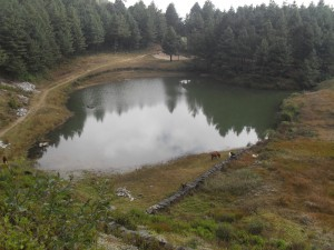 Simpokhari – amazing pond surrounded by coniferous trees