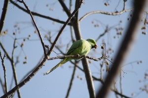 20. green parrot on a tree eating a nut
