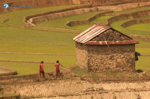 12. A solitary house in the middle of the paddy fields..