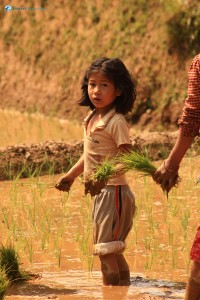 25. Little girl helping her mother in the fields..