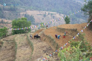 31. Nepalese people still cultivating in a traditional fashion