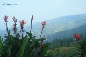 15. The beauty of Jhule