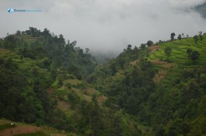 2. Green forest Nepal's Property
