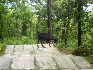 36. The organic goat grazing on green jungle