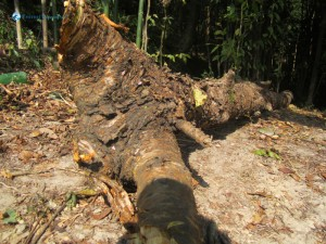 26. I used to be a tree