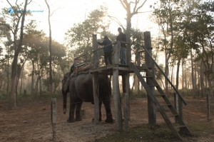 77. Time for Elephant Safari