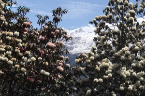 101. A Glimpse of Snow Through the Flowers