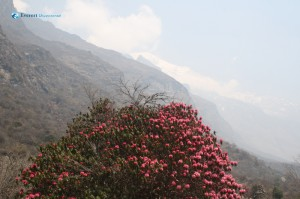 30. High Himal in the Distance