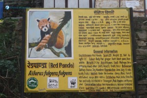 5. This is as close as we came to seeing a Red Panda