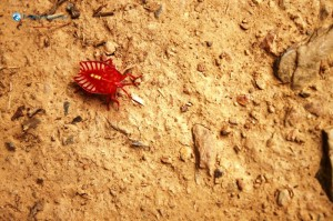 26. Red Insect