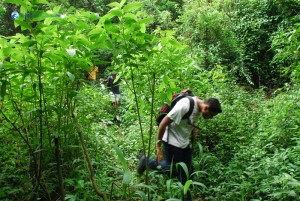 36. In the middle of the Jungle