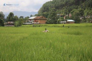 31. I own this paddy field