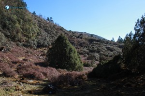 46. Walking up hill to Thade Pati