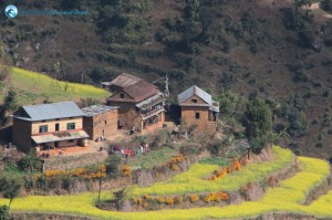 3. Beautiful terraces on the way to Lakuri Bhanjyang