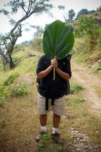22. Guess the person behind the giant leaf