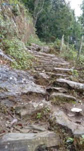 10. The trail