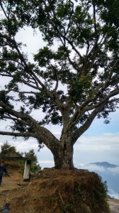 9. The lonely tree
