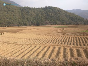 25. fields in the chitlang valley