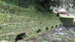 28. Moss infested Beauty of a Chautari