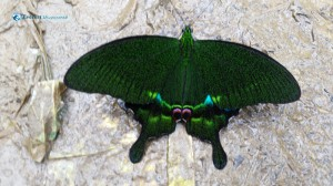 23. Butter fly butterfly which colour do you like