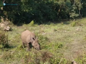 51. Rhino eating the sorus