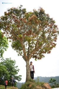 47. One tree Hill