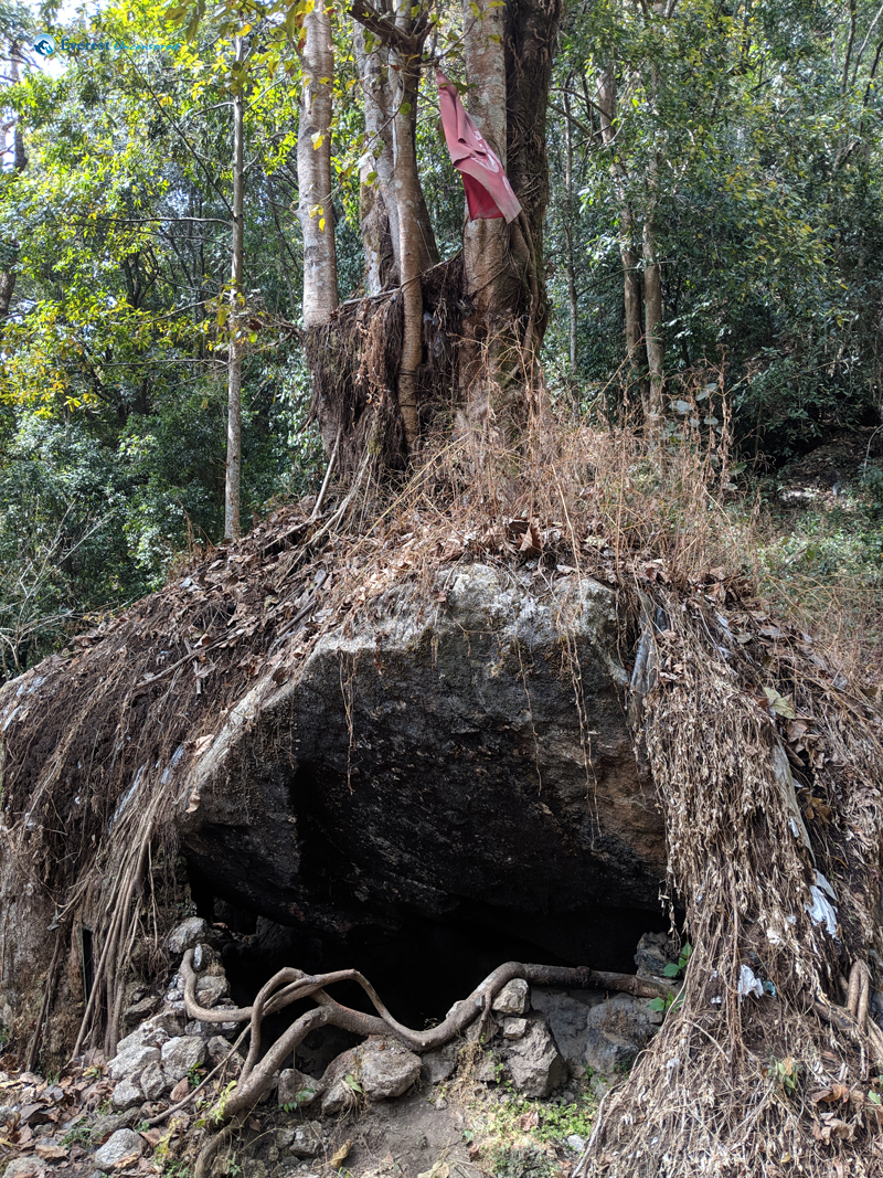 10. Cave Under The Tree