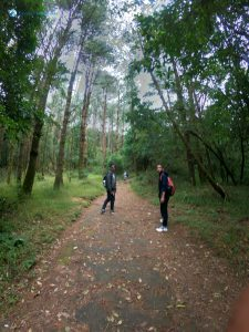 13. Into the dense forest.jpg